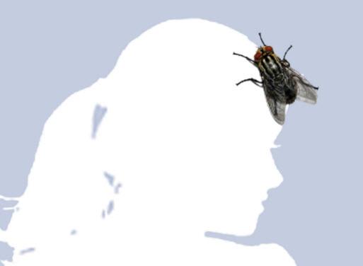 Hình avatar – Ruồi bâu.