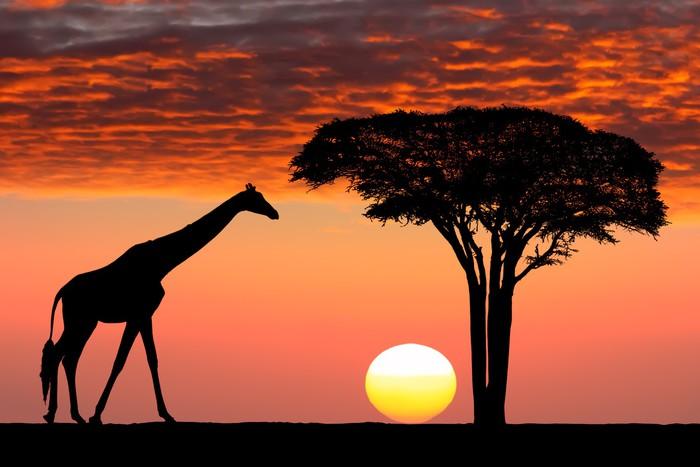 Canh hoang hon tai khu bao ton Maasai Mara - Kenya
