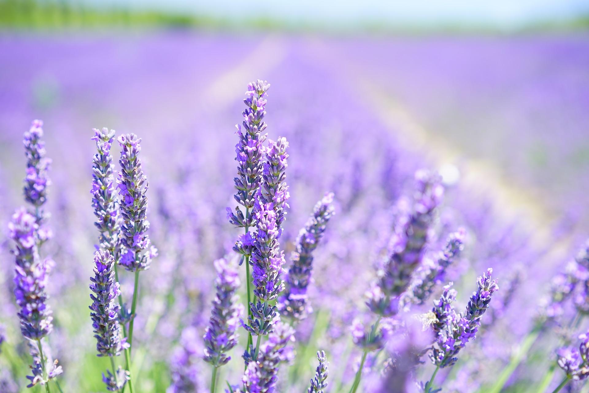 Những Hình ảnh Hoa đẹp Rạng Rỡ Nhất Rung động Trái Tim