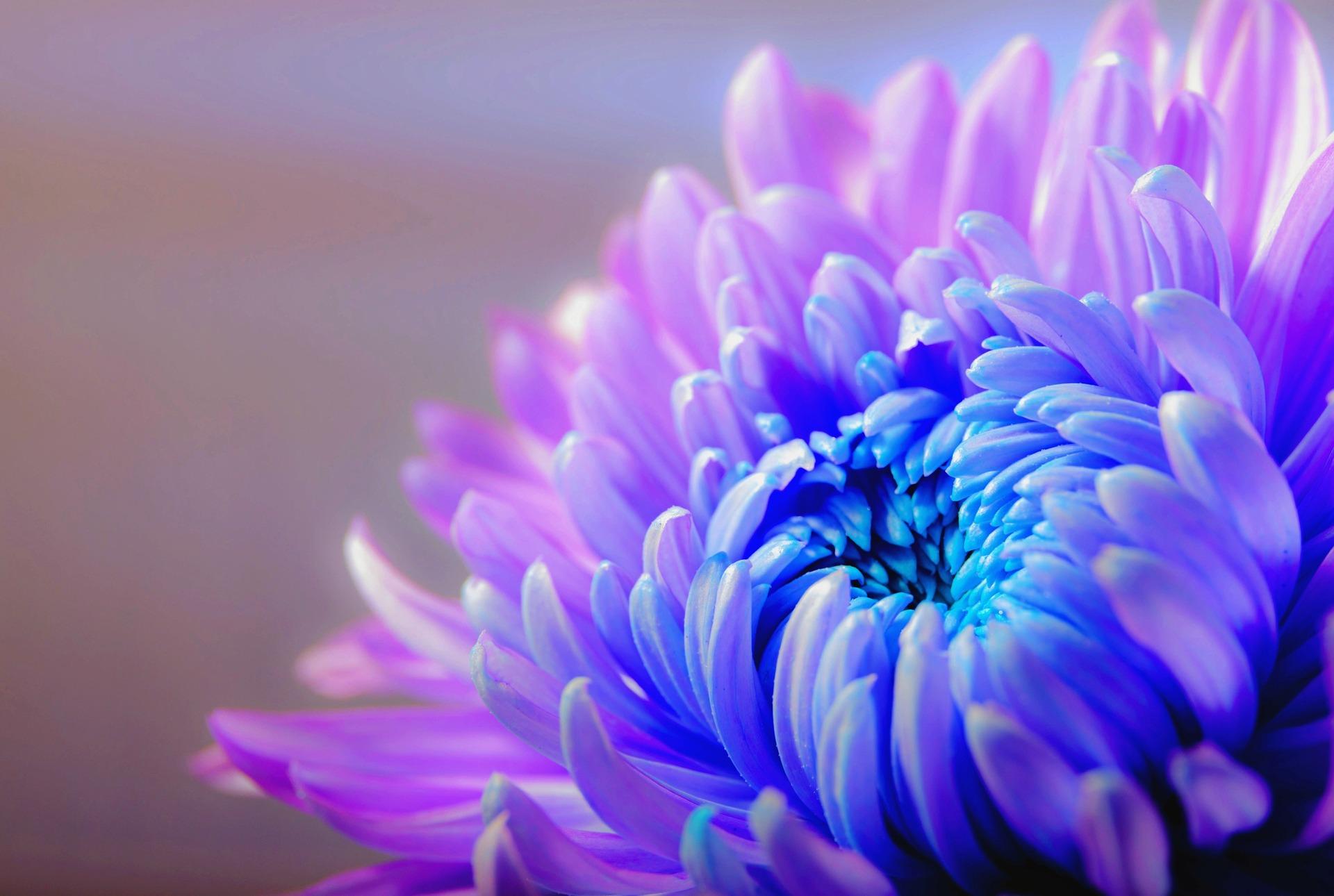 hinh nen marco hoa cuc xanh