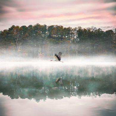 hình ảnh chim hạc bay trên hồ nước sương mù