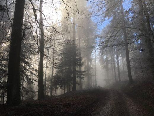 Con đường sương mù trong rừng