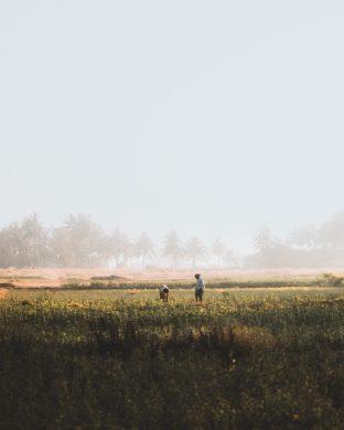 hình ảnh sương mù trên cánh đồng sớm