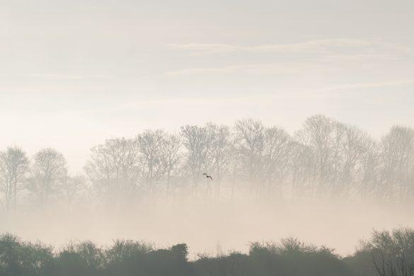 Hình ảnh chim bay ven rừng đầy sương mù