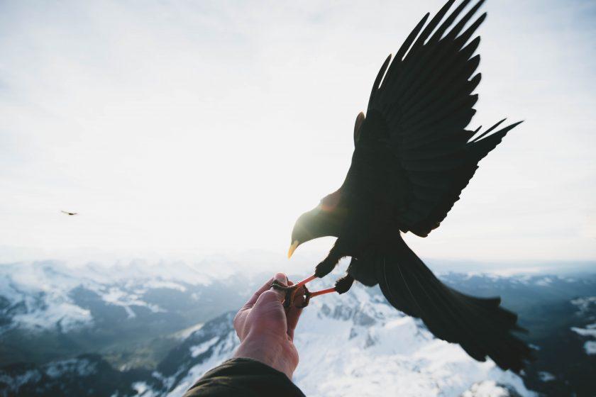 hinh anh chim dai bang dau tren tay nguoi
