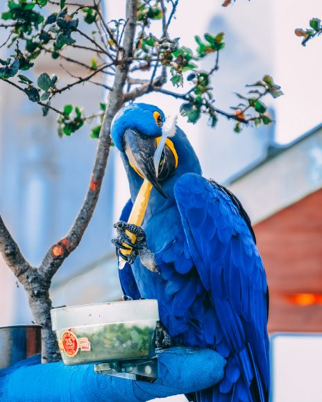 hinh nen chim vet xanh cho dien thoai