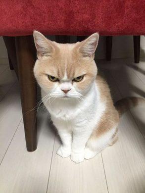 anh meo bieu cam kho tinh cute Hình ảnh con mèo dễ thương, mong manh siêu đáng yêu