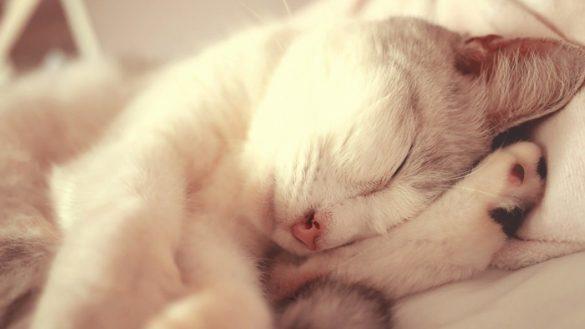 anh meo cute nam ngu Hình ảnh con mèo dễ thương, mong manh siêu đáng yêu