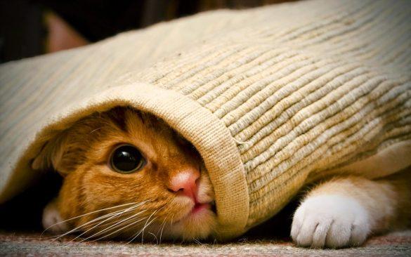 anh meo ngo nghinh dang yeu Hình ảnh con mèo dễ thương, mong manh siêu đáng yêu