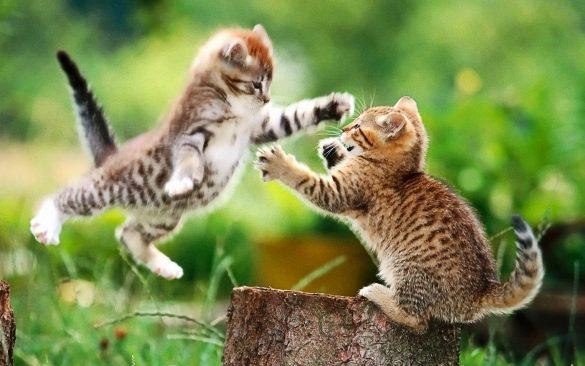 hinh anh 2 con meo chien dau Hình ảnh con mèo dễ thương, mong manh siêu đáng yêu