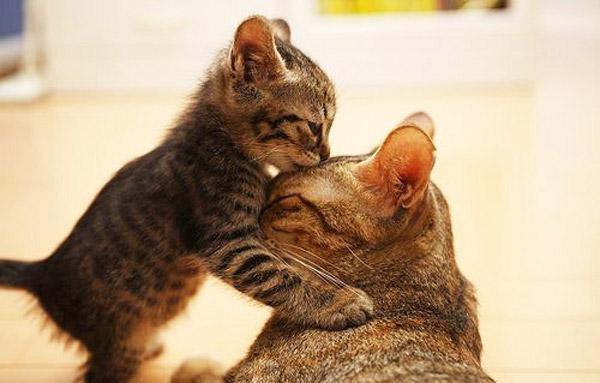 hinh anh meo con va meo me tinh cam Hình ảnh con mèo dễ thương, mong manh siêu đáng yêu