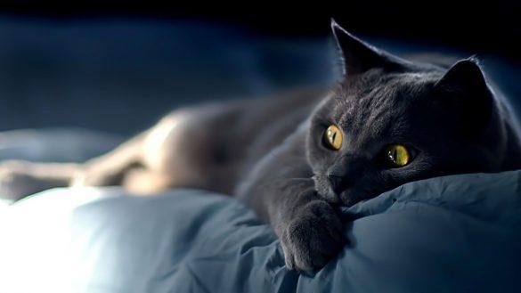 hinh anh meo den va doi mat sang ruc Hình ảnh con mèo dễ thương, mong manh siêu đáng yêu