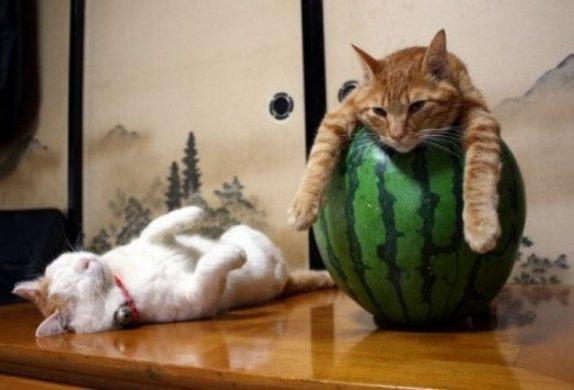hinh anh 2 con meo luoi bieng Hình ảnh con mèo dễ thương, mong manh siêu đáng yêu