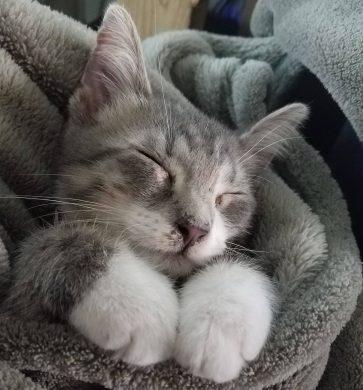 Hình ảnh con mèo dễ thương, mong manh siêu đáng yêu