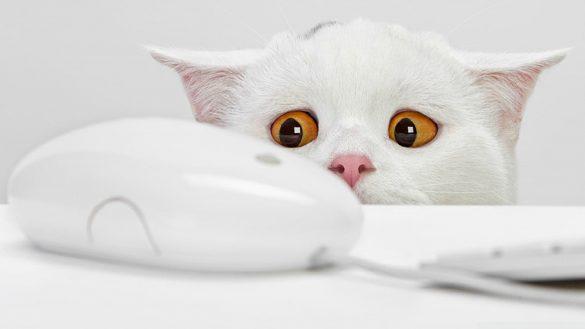 hinh meo trang dang yeu Hình ảnh con mèo dễ thương, mong manh siêu đáng yêu