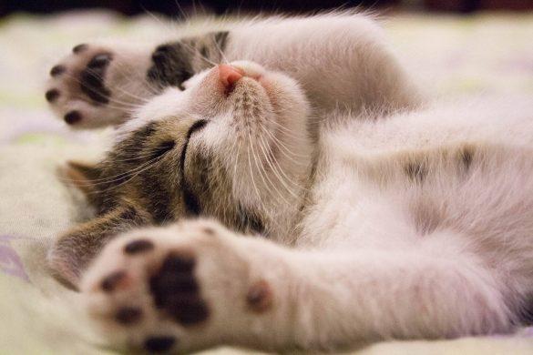 Hinh nen meo luoi cute cho desktop Hình ảnh con mèo dễ thương, mong manh siêu đáng yêu