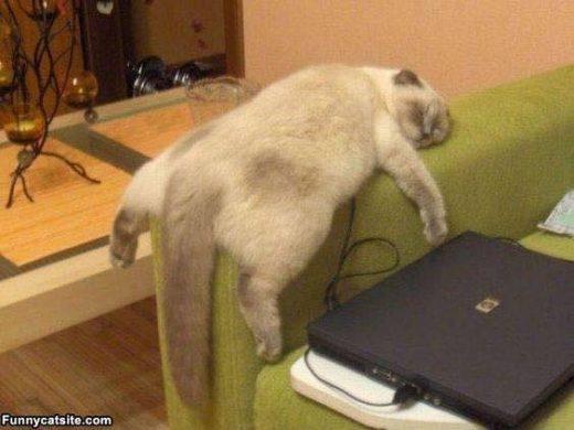 hinh meo luoi ngu gat Hình ảnh con mèo dễ thương, mong manh siêu đáng yêu