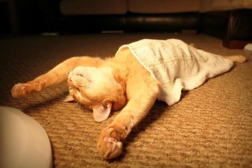 mèo đẻ trong nhà