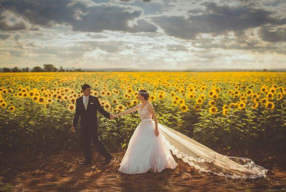 Ảnh cưới bên vườn hoa hướng dương
