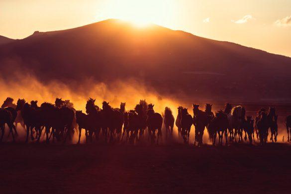 ảnh nền 4k đàn ngựa phi trong nắng sớm