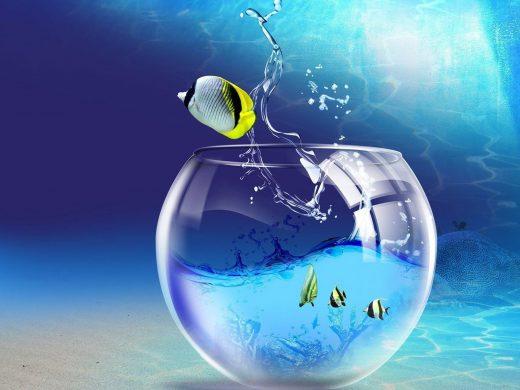 Hình nền 3D con cá