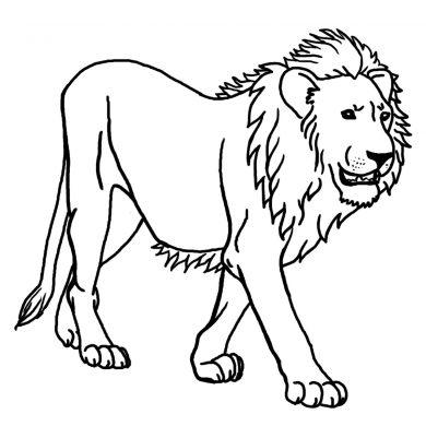 Hình vẽ đen trắng con sư tử mạnh mẽ, cũng đáng sợ.