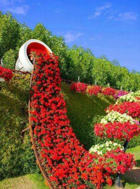 vuon hoa hong nhung dep sang tao