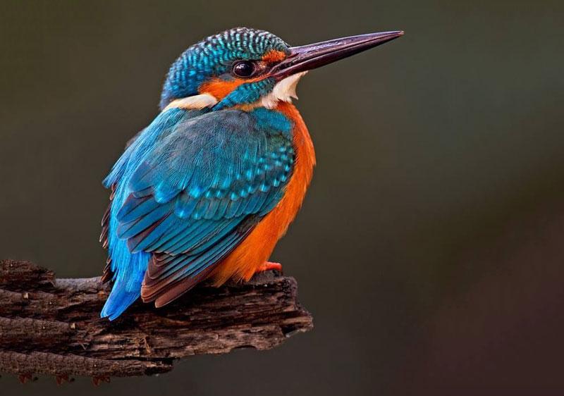 chim bói cá khi đứng nhàn rỗi một mình