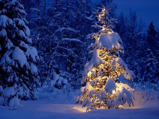 cây thông phủ tuyết trắng và đèn sáng lung linh dịp Noel