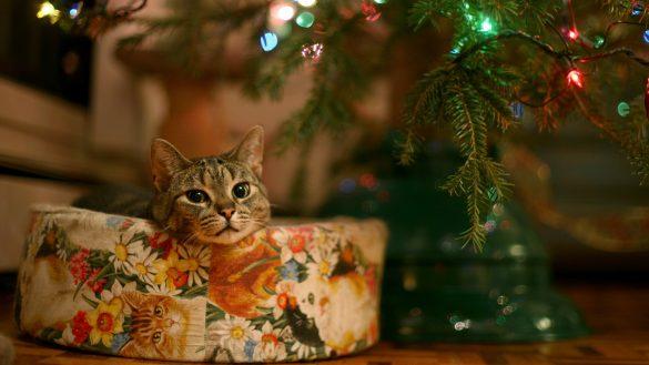 anh chu meo mo mong trong Noel