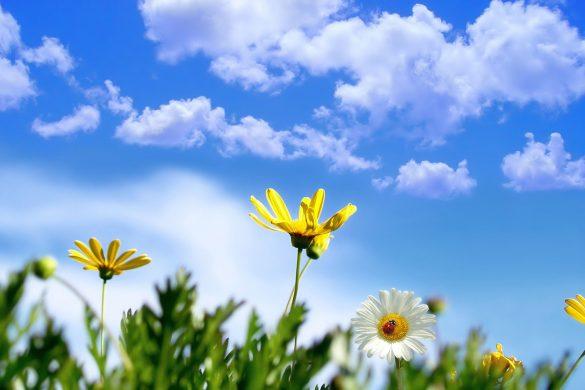 ảnh bầu trời xanh và hoa Full HD