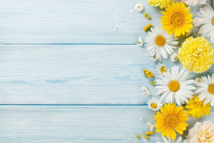 background hoa cúc trên nền gỗ