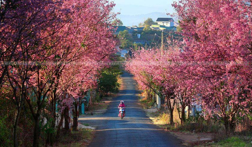con duong hoa dao tai Ba Ria-Vung Tau