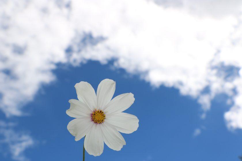 hình ảnh bầu trời xanh và hoa HD