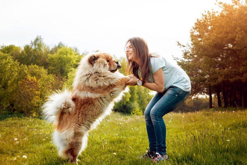 hình ảnh chú chó thông minh đang bắt tay với cô chủ