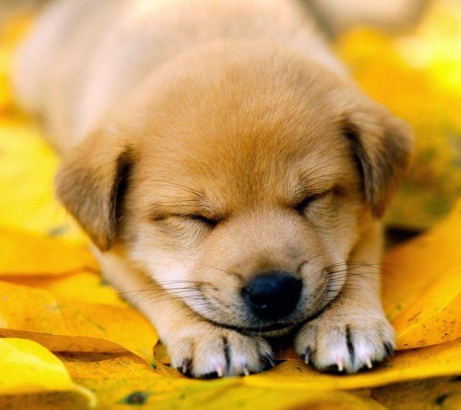 Hình ảnh cún con dễ thương cute làm hình nền đẹp
