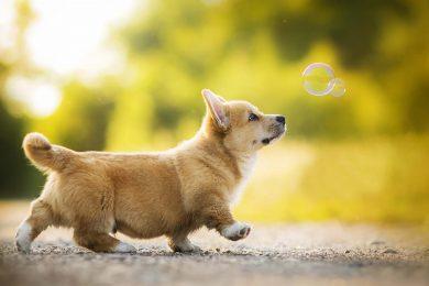 hình ảnh những chú chó dễ thương nhất