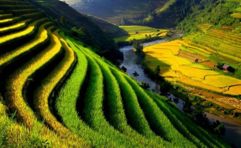 hình ảnh ruộng bậc thang nét đẹp của quê hương Việt Nam