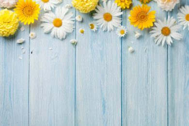 hình nền background hoa đẹp đơn giản