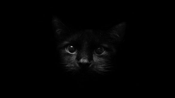Hình nền đen và mèo đên