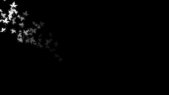 Hình nền đen và những chiếc lá phong đẹp tuyệt vời