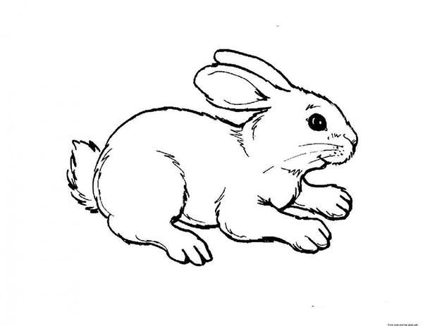 hình vẽ con thỏ cho bé tập tô