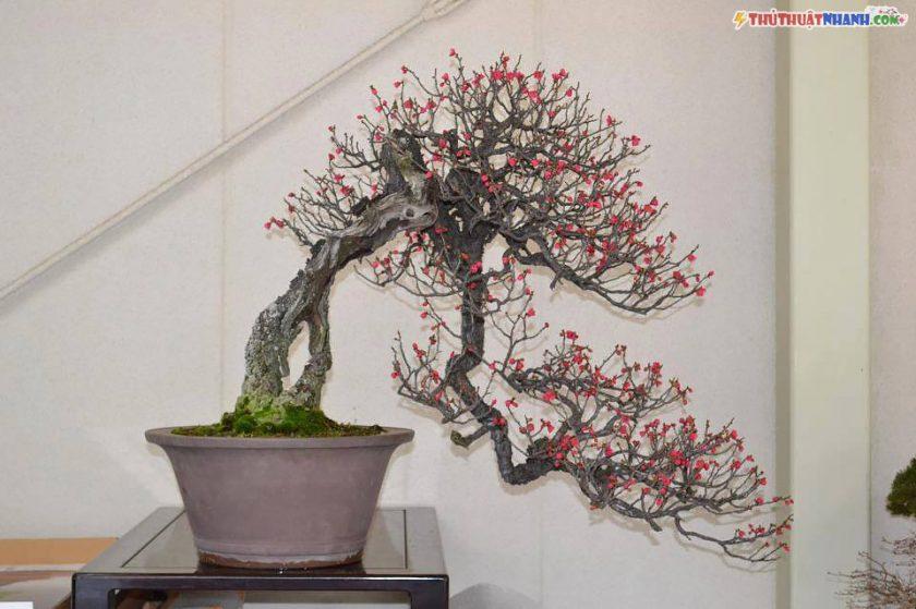 mẫu cây đào tết dáng bonsai