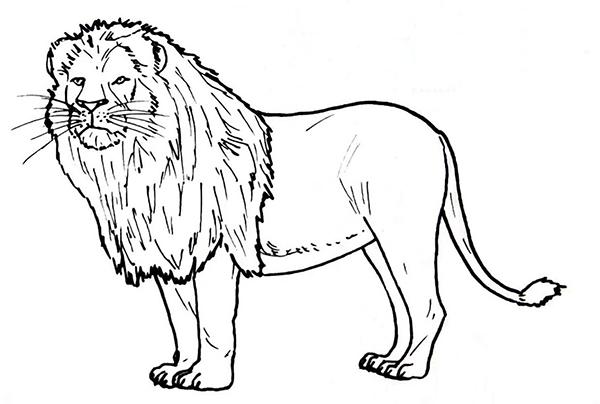 tranh tô màu con sư tử trong rừng cho bé 6 tuổi