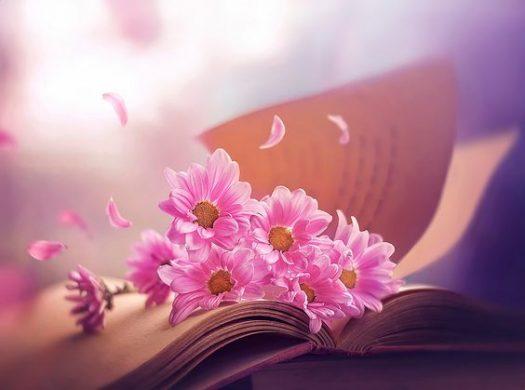 ảnh đại diện hoa đẹp