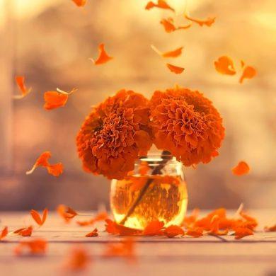 ảnh đại diện hoa màu cam