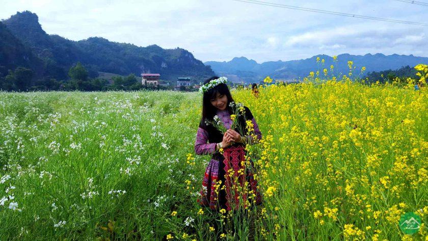 canh dong hoa cai vang o Moc Chau Hình ảnh hoa cải vàng rực rỡ đẹp nhất khiến người xem xao xuyến