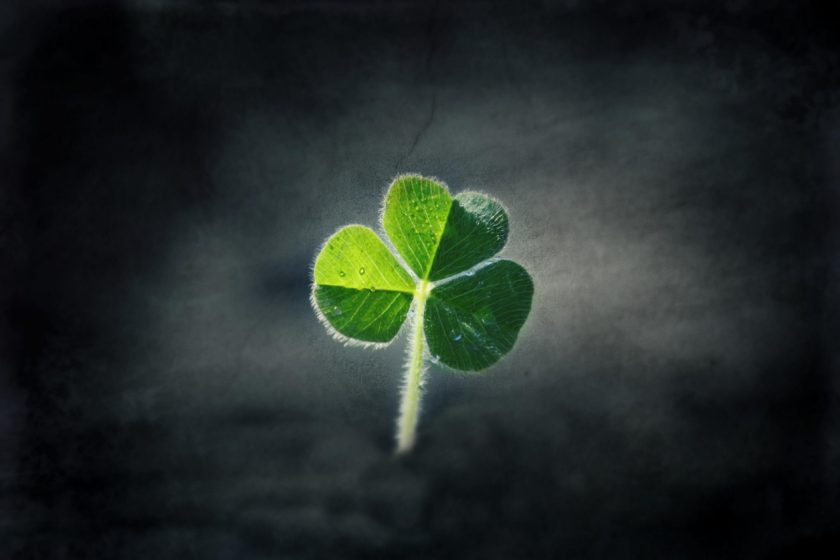 clover wallpapers hd
