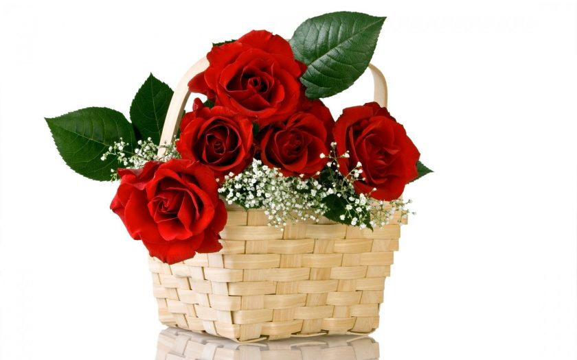 gio hoa valentine hoa hong do tham