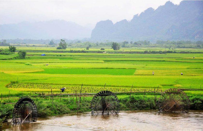 hinh anh canh dong lua tai Ninh Binh